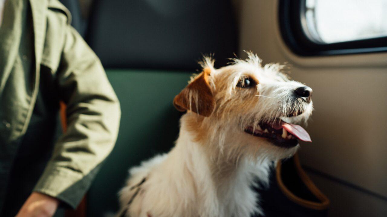 犬とアメリカから日本に帰国する